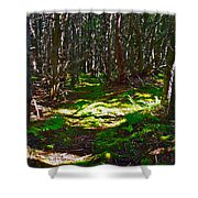 Thicket-like Woods And Spongy Moss Near Lobster Cove In Gros Mor Shower Curtain