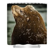 Things Are Looking Up-sealion Shower Curtain