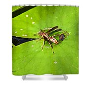 Thirsty Bee On Waterlily Shower Curtain