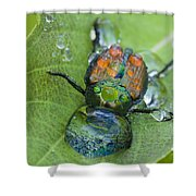 Thirsty Beetle Shower Curtain