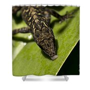 Thirsty Brown Anole Shower Curtain