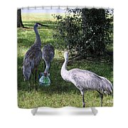 Thirsty Cranes Shower Curtain