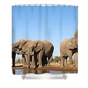 Thirsty Elephant Herd Shower Curtain