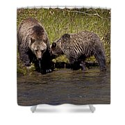 Thirsty Grizzlies  #3418 Shower Curtain
