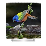 Thirsty Painted Bunting Shower Curtain