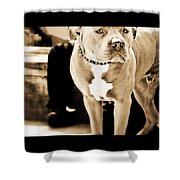 This Dog Has A Soul Shower Curtain