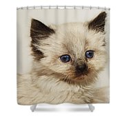 This Girl Just Wants To Be Loved Shower Curtain by Andee Design