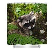 This Is A Nice Spot To Sleep Shower Curtain
