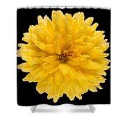 This Yellow Chrysanthemum Shower Curtain