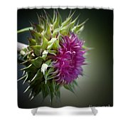 Thistle 14-3 Shower Curtain