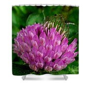 Thistle Beauty Shower Curtain