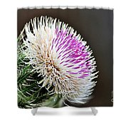 Thistle Bloom Shower Curtain