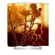 Thistle Edge Glow Shower Curtain