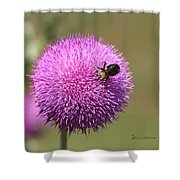 Thistle And A Bee Shower Curtain