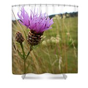 Thistle In A Swiss Field Shower Curtain