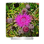 Thistle In Saint Mary's Ecological Reserve-newfoundland Shower Curtain