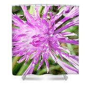 Thistle In Umbria Shower Curtain