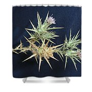 Thistle Of Israel Shower Curtain