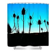Thistles At Sunset Shower Curtain