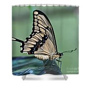Thoas Swallowtail Butterfly Shower Curtain