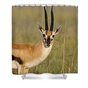Thomsons Gazelle Shower Curtain