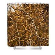 Thorn Bush Shower Curtain