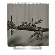 Thorns Of The Acacia Tree Shower Curtain