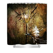 Thorns Shower Curtain by Stelios Kleanthous
