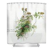 Thorny Burnet C1950 Shower Curtain