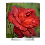Thorny Red Rose Shower Curtain
