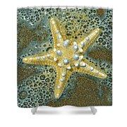 Thorny Starfish Shower Curtain