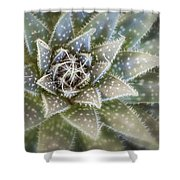 Thorny Succulent Shower Curtain