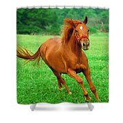 Thoroughbred Filly Shower Curtain