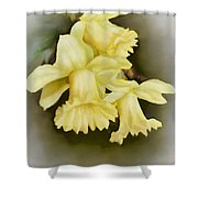 Those Blooming Daffadils Shower Curtain