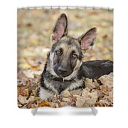 Those Ears Shower Curtain