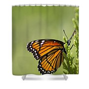 Those Magnificent Monarchs - Danaus Plexippus Shower Curtain