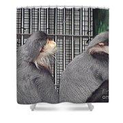 Thoughtful Monkeys Shower Curtain