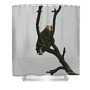 Threatened  Shower Curtain