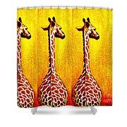 Three Amigos Giraffes Looking Back Shower Curtain