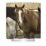 Three Amigos Shower Curtain by Steven Bateson