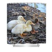 Three Baby Ducks Shower Curtain