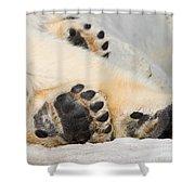 Three Bear Paws Shower Curtain