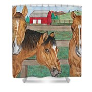 Three Beautiful Horses Shower Curtain