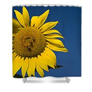 Three Bees And A Sunflower Shower Curtain by Adam Romanowicz