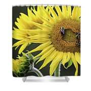 Three Bees On A Sunflower Shower Curtain