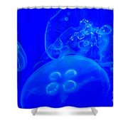 Three Blue Jellyfish Shower Curtain