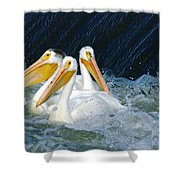 Three Buddies Hanging Out Shower Curtain