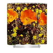 Three California Poppies Among Goldfields In Antelope Valley California Poppy Reserve Shower Curtain