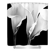 Three Calla Lilies In Black And White Shower Curtain
