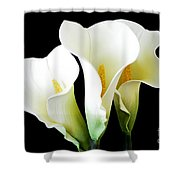 Three Calla Lilies On Black Shower Curtain